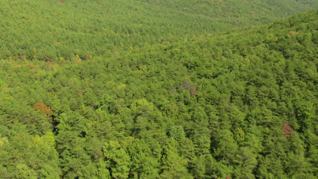 ws aerial tu view of forest valley in talladega national forest in cleburne county / alabama, united states - hügelkette stock-videos und b-roll-filmmaterial