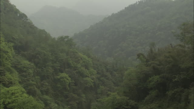 View of forested slopes, Mount Emei, China