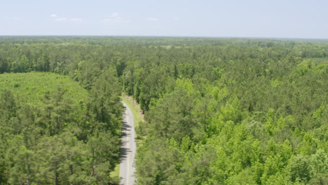 WS AERIAL POV View of Francis Marion National Forest / Berkeley County, South Carolina, United States