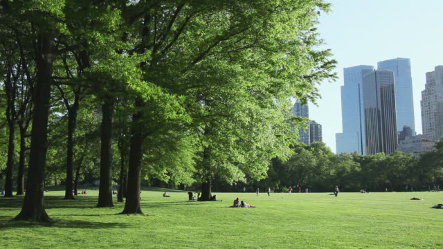 ws view of fresh green trees standing and leaves shaking by wind and people relaxing at central park / new york, united states - マンハッタン セントラルパーク点の映像素材/bロール