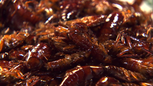 view of fried cockroach - abundance stock videos & royalty-free footage