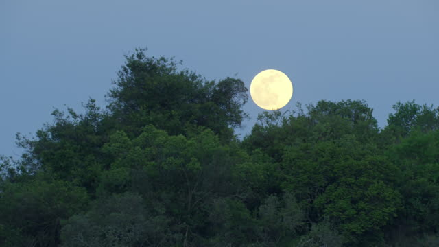 WS AERIAL View of full moon in front of trees / Kenya