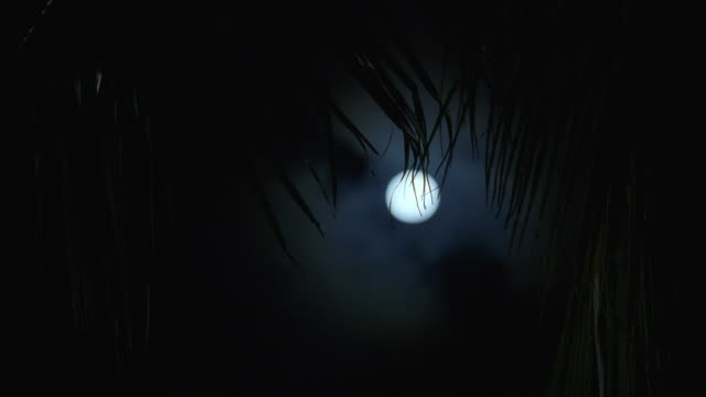 ws view of full moon with palm tree in foreground - full moon stock videos & royalty-free footage