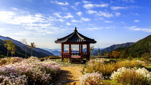 View of Gazebo and Chrysanthemum Zawadskii flowers at Gapyeonggun in Gyeonggi-do