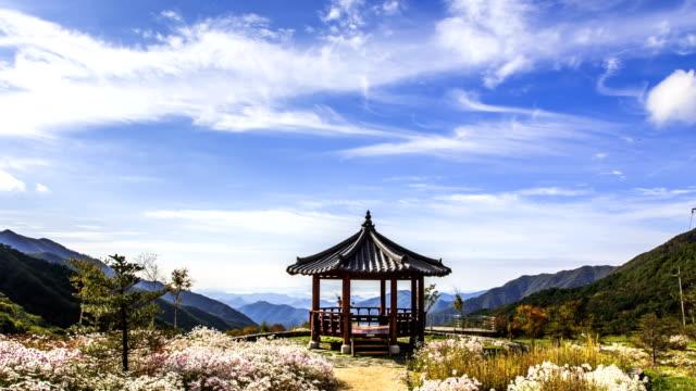view of gazebo and chrysanthemum zawadskii flowers at gapyeonggun in gyeonggi-do - gazebo stock videos & royalty-free footage