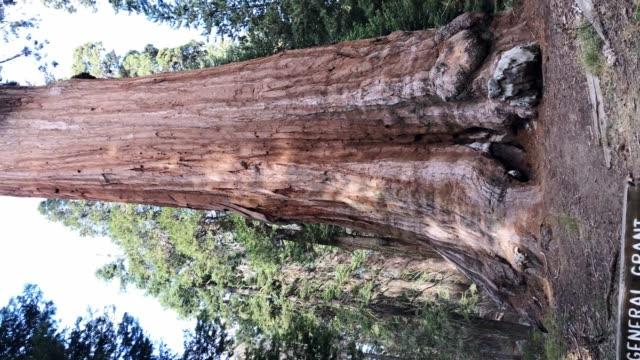 vídeos y material grabado en eventos de stock de vista de general grant - parque nacional sequoia - parque nacional de secoya