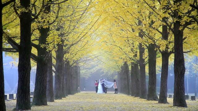 vídeos de stock, filmes e b-roll de view of ginkgo tree-lined street at namiseom island in autumn - papel em casamento