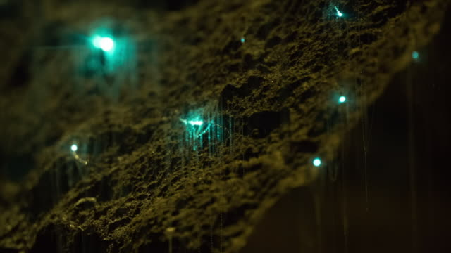 view of glowworms sticking to wall inside of waitomo cave - グローワーム点の映像素材/bロール