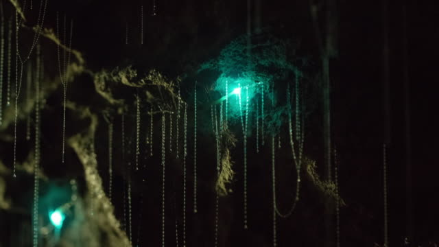 view of glowworms sticking to wall inside of waitomo cave - höhle stock-videos und b-roll-filmmaterial