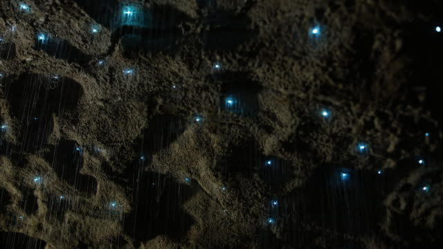 View of Glowworms sticking to wall inside of Waitomo cave