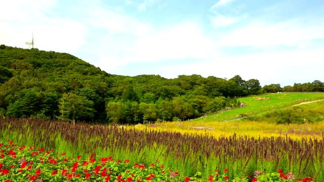 View of grass area with flock of sheep at Samnyangmokjang pasture in Daegwallyeong