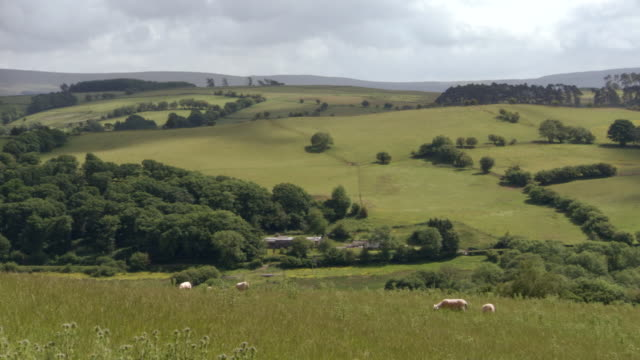 ws pan view of grass field near mountains / powys, wales - powys stock videos and b-roll footage