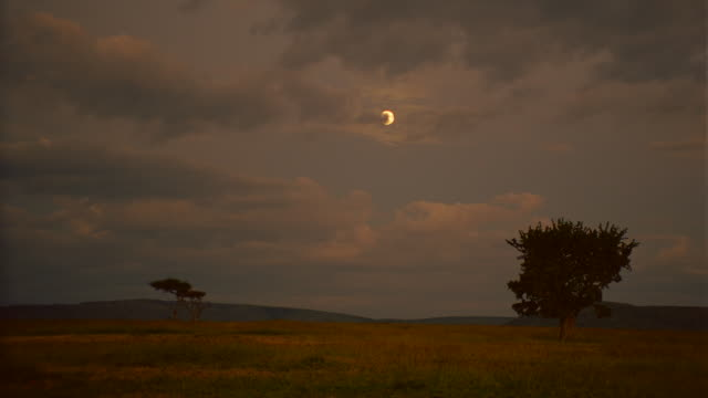 WS View of grassland and trees with sun being partly obscured by storm clouds / Masai Mara, Kenya