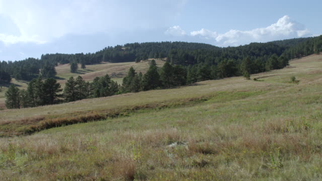 ws pov view of grassy landscape / custer state park, south dakota, united states - custer staatspark stock-videos und b-roll-filmmaterial