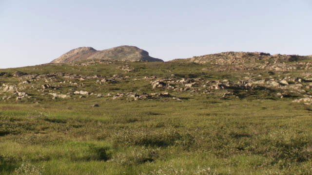 stockvideo's en b-roll-footage met ws view of grassy landscape with large rocks along hill tops / torgat mtns, labrador, canada - wiese