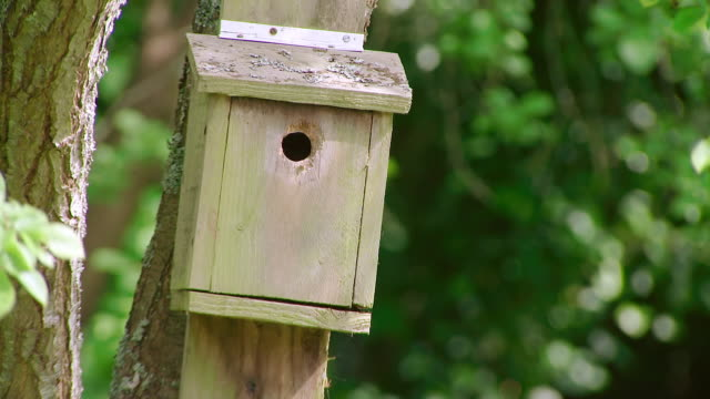 ms slo mo view of great tit bird box / various, united kingdom - birdhouse stock videos & royalty-free footage