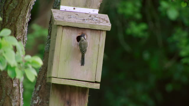 ms slo mo view of great tit going inside to bird box / various, united kingdom - birdhouse stock videos & royalty-free footage