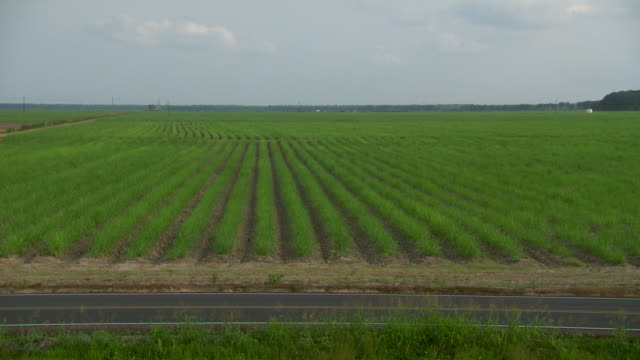 ws view of green field / new orleans, louisiana, united states - new stock videos and b-roll footage