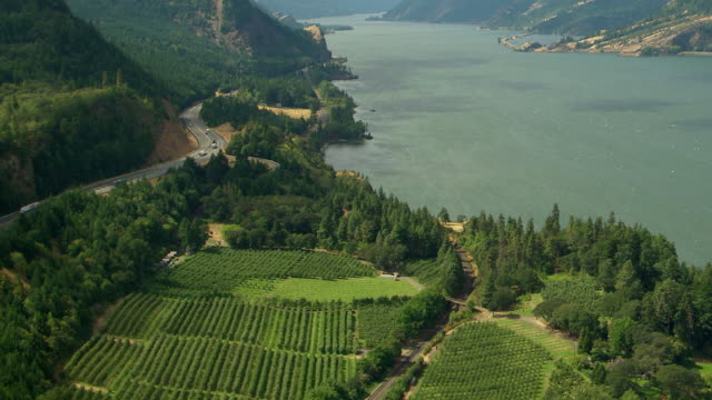 ms aerial view of green orchard tilt to reveal columbia river gorge / oregon, united states - columbia river gorge stock videos & royalty-free footage