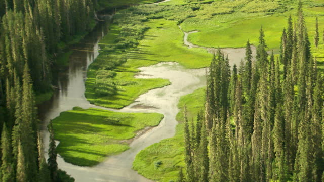 WS AERIAL View of green river marshes and evergreen trees / Washington, United States