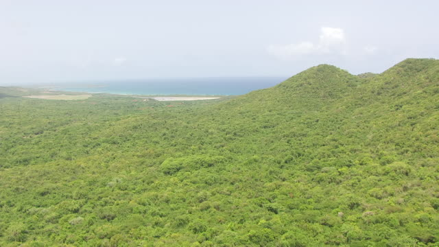 WS AERIAL POV View of green tree on hills near bay / Vieques, Puerto Rico, United States