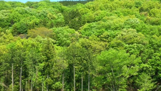 view of green trees swaying in the wind - 揺れる点の映像素材/bロール