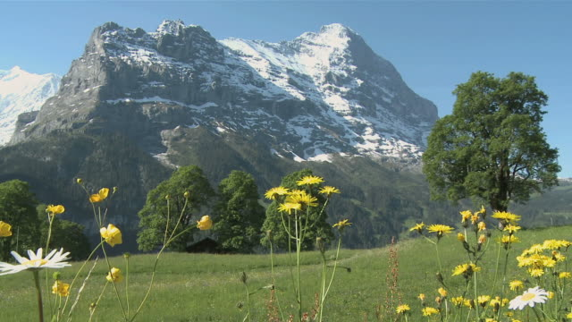 ws view of grindelwald at eiger mountains / grindelwald, bernese alps, switzerland - european alps stock videos & royalty-free footage