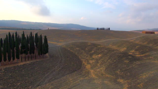 ws aerial view of grove of cypress trees on tuscan hills in crete senesi / siena, tuscany, italy - grove stock videos & royalty-free footage