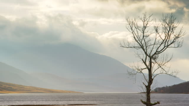 ws t/l view of gualachulain by loch etive, solitary tree and mountains with clouds / gualachulain, scotland, united kingdom - loch点の映像素材/bロール