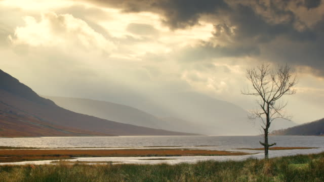 ws view of gualachulain by loch etive, solitary tree and mountains with clouds / gualachulain, scotland, united kingdom - loch点の映像素材/bロール