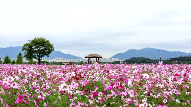 View of Guri Hangang Park (Cosmos Park)(Famous tourist attractions)
