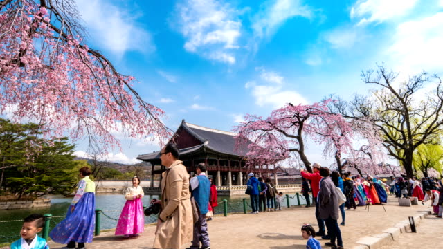 view of gyeonghoeru pavilion (national treasures of south korea 224) in gyeongbokgung royal palace (korean national treasure 223) and cherry blossoms with many tourists - seoul stock videos & royalty-free footage
