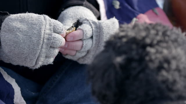 View of hands feeding bread to dog