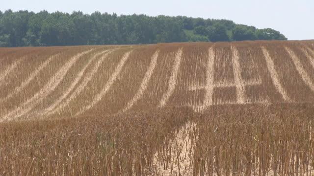 ws view of harvested corn field / saarburg, rhineland palatinate, germany - rhineland palatinate stock videos & royalty-free footage