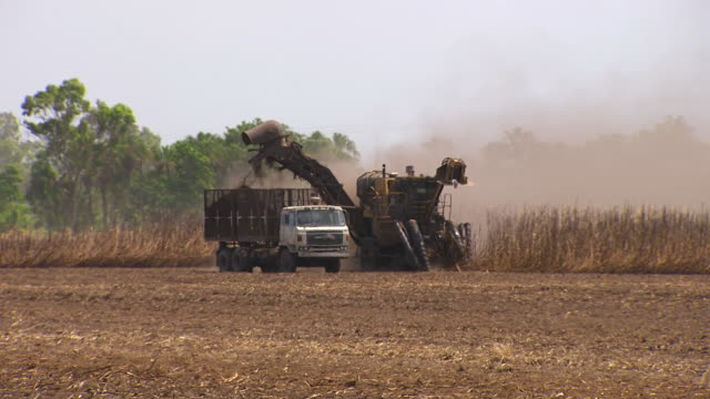 ws ts view of harvester and truck collecting cane tractor driving past with load of cane / queensland, australia - heavy goods vehicle stock videos & royalty-free footage