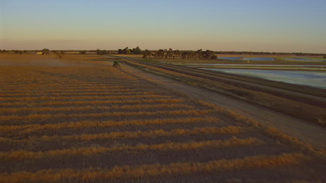 MS AERIAL ZI View of harvesting at sunset / New South Wales, Australia