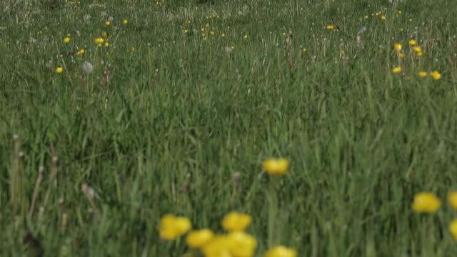 view of heage windmill, heage, derbyshire dales, derbyshire, england, uk, europe - ranunkel stock-videos und b-roll-filmmaterial