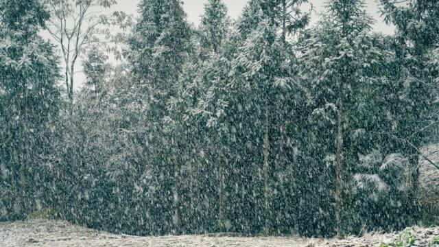 vídeos de stock, filmes e b-roll de vista da neve pesada - chuva congelada
