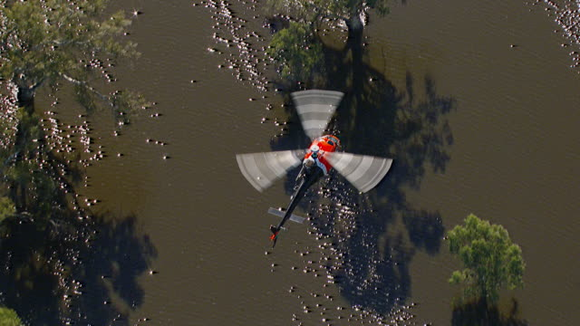 WS AERIAL View of helicopter flying over floods / Griffith, New South Wales, Australia
