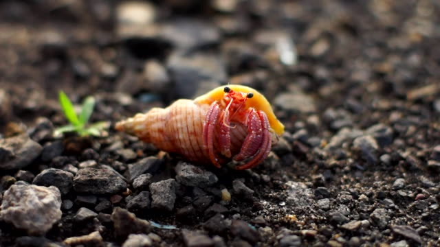 view of hermit crab - north gyeongsang province stock videos & royalty-free footage