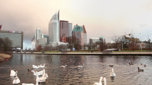 view of high rise buildings, mainly ministeries. geese swim in pond. the hague, netherlands - the hague stock videos and b-roll footage