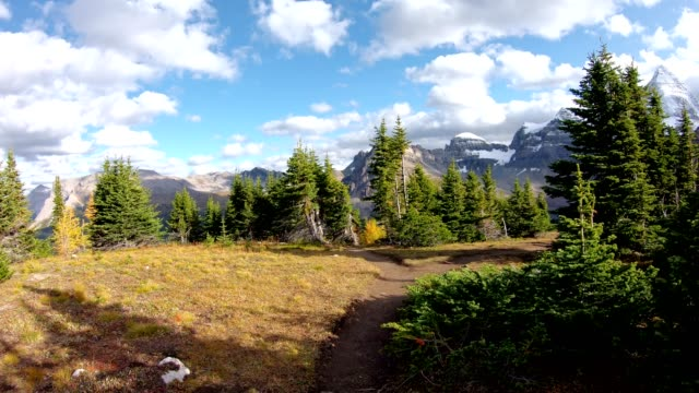 view of hiker is hiking on niblet mountain with mount assiniboine in autumn forest at provincial park - banff stock videos & royalty-free footage