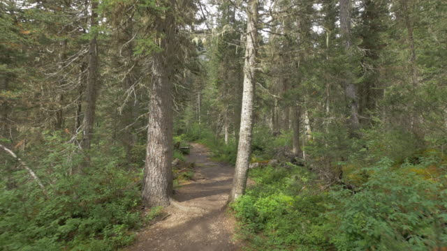 pov view of hiking on the berg lake trail, mt. robson provincial park. - footpath stock videos & royalty-free footage