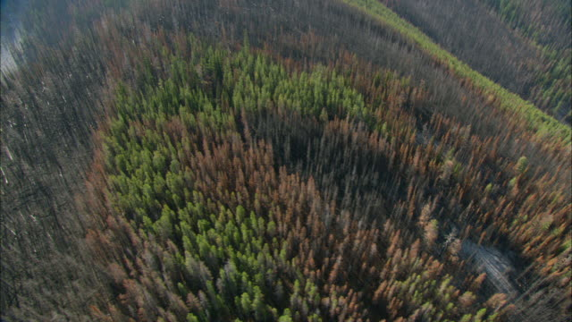 aerial view of hill covered with burnt forest / marion, montana, usa - dead stock videos & royalty-free footage