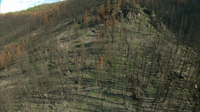 aerial view of hill covered with burnt forest / marion, montana, usa - 枯れた植物点の映像素材/bロール