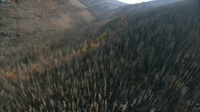 aerial view of hills covered with burnt forest / marion, montana, usa - 枯れた植物点の映像素材/bロール