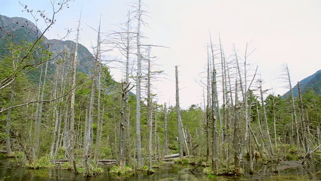 ws pan view of hodaka mountains and withered trees / kamikochi, nagano, japan - 枯れた植物点の映像素材/bロール