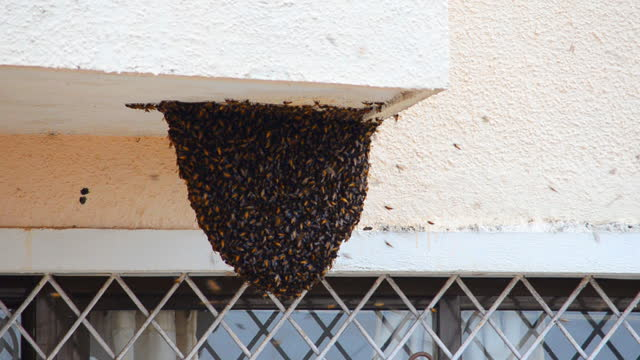 view of honey hive hanging on the roof of a building near window - hanging stock videos & royalty-free footage