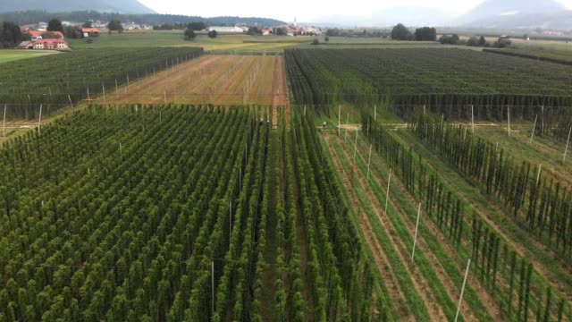 view of hops field from above - hops crop stock videos and b-roll footage