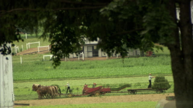 ws view of horse drawn tractor moving across field carrying bale / philadelphia, pennsylvania, usa - erbivoro video stock e b–roll